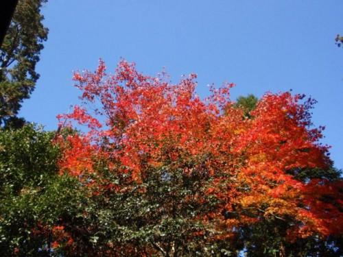 WITH TEA 紅葉
